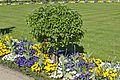 Klostergarten Seligenstadt Ontario Apple.jpg