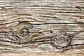 Knots in old Planking 9746.jpg