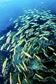 Koh Chang diving 2.jpg