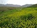 Kohgiluyeh Va Boyer Ahmad, Sepidan - Yasuj Rd, Iran - panoramio.jpg
