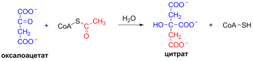 Krebs Cycle Reaction 1 ru.png