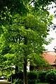 Kreis Pinneberg, Naturdenkmal 06-26 Uetersen 01.jpg