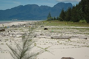 Kuching Wetlands National Park - View of the beach and pine habitat towards Mt. Santubong