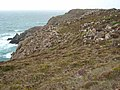 Kynance Cliffs - geograph.org.uk - 256436.jpg