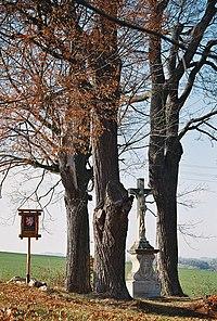 Lípy a javor mezi Zbraslaví a Štědrou.jpg