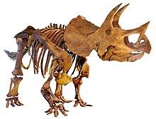 LA-Triceratops mount-2.jpg