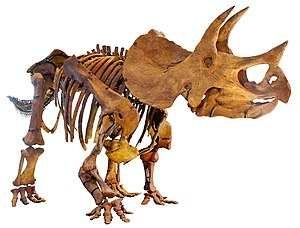 Triceratops - Skeletal mount of a T. prorsus specimen at the Natural History Museum of Los Angeles