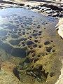 La Perouse NSW 2036, Australia - panoramio - noah.odonoghue (21).jpg