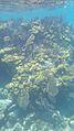 Laika ac Coral Reef (7174367725).jpg