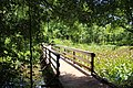 Lake Conestee Nature Park boardwalk, June 2019.jpg
