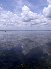 A vast body of water, flat and calm, with a distant horizon and massive clouds overhead that are reflected in the water. In the foreground are aquatic grasses and plants.