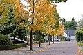 Landrebenlaan at autumn - panoramio.jpg