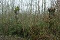 Landschap De Stroopers te Kemzeke - 372026 - onroerenderfgoed.jpg