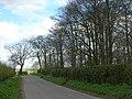Lane Beside Crow Wood - geograph.org.uk - 1240952.jpg