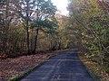 Lane through Orlestone Forest - geograph.org.uk - 1559897.jpg