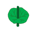 Leaf morphology attachment connate-perfoliate.png