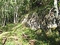Limestone outcrop - geograph.org.uk - 946782.jpg