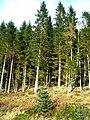 Loch Ard Forest - geograph.org.uk - 1056501.jpg