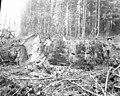 Loggers beside 12-foot diameter spruce tree stump, North River, Grays Harbor County, ca 1918 (KINSEY 779).jpeg