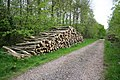 Logs in Potterhanworth Wood - geograph.org.uk - 425033.jpg