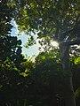Look Up!.jpg