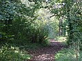 Looking along the public footpath through the woods - geograph.org.uk - 308208.jpg