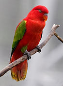 A red parrot with green wings and ankles