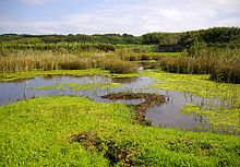Lower Moor Wetland, St. Mary's - geograph.org.uk - 931546.jpg
