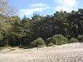 Mähe beach - panoramio - Aulo Aasmaa (1).jpg