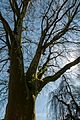 Münster, Park Sentmaring, Naturdenkmal -- 2015 -- 5656.jpg