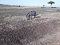 Maasai Mara National Reserve 03.jpg