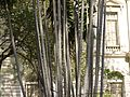 MacArthur palm (4611186266).jpg