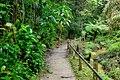 MacRitchie Nature Trail, Singapore; December 2014 (05).jpg