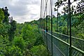 MacRitchie Nature Trail, Singapore; December 2014 (09).jpg