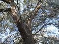 Magnolia Plantation and Gardens - Charleston, South Carolina (8556530876).jpg