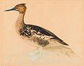 Magnus von Wright Bird.jpg