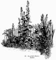Manual of Gardening fig021.png