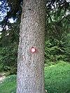 Markacija drevo.jpg