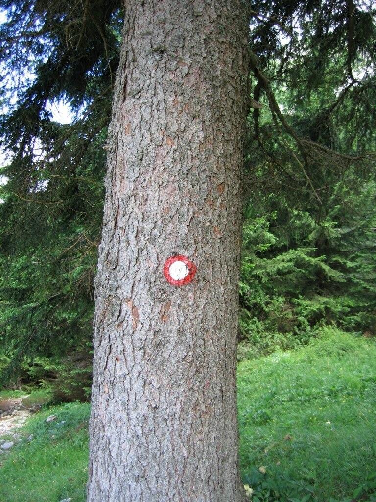 Markacija drevo