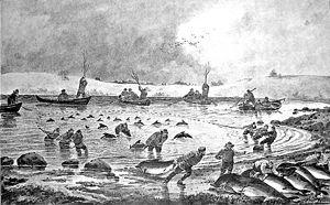 Little Belt - 19th century harbour porpoise catch in Gamborg Fjord