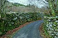 Mature stone dykes - geograph.org.uk - 1637032.jpg