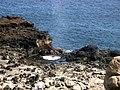 Maui Blowhole 2007 - panoramio.jpg