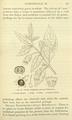 Medicinal Herbs Poisonous Plants-136.png