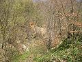 Medvednik - zapadna Srbija - selo Rebelj - okna starog rudnika bakra na Medvedniku 1.jpg
