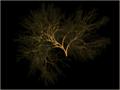Megabox Tree.png