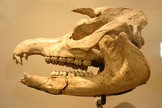 Giant tapir species of mammal