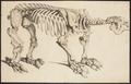 Megatherium cuvierii - skelet - 1700-1880 - Print - Iconographia Zoologica - Special Collections University of Amsterdam - UBA01 IZ21000125.tif