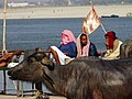 Men with Water Buffalo at Ghat - Varanasi - Uttar Pradesh - India (12480285433).jpg