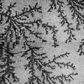 Microscopic trees made by phosphate cristals, image consist of 2x2 fields of view 4.tif