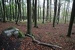 Mittelhessische Landheegen (010).JPG